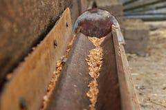 A calha para a grão para galinhas homemade Para o alimento às galinhas outdoor fotografia de stock