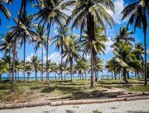 Calhetas strand, inre av Pernambucoen, Brasilien arkivbild