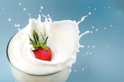 Cali della fragola in latte Immagine Stock