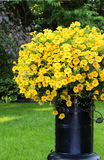 Calibrachoa flowering plant Stock Photo