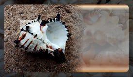 Calibre abstrait de fond de coquille de mer pour le site Web, conception abstraite de calibre de graphiques de l'information image stock