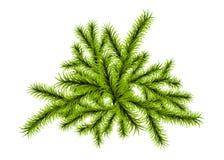Calibre de branche d'arbre de Noël illustration libre de droits