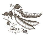 Calibre de conception de logo de vecteur de pois Produit-légumes frais de vegetables Photo libre de droits