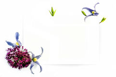 Calibre pour la conception d'invitation avec la découpe de clématite et d'encre de fleur fraîche Photographie stock