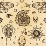 Calibre sans couture : éléments de faune - la coquille, trillobit, un papillon, un crâne, un radiolaire, symboles de l'espace illustration stock