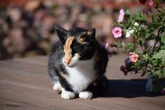 Calicò e fiori Immagine Stock Libera da Diritti