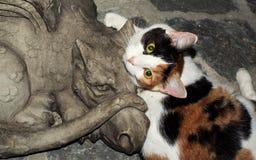 Calicó y dragón foto de archivo libre de regalías