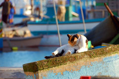 Calico Cat. This is a cat cleaning himself on a dock in Malta Stock Images