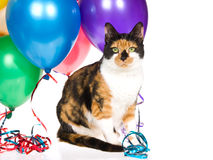 Calico cat with balloons and streamers on white Royalty Free Stock Photos