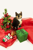 Tortoiseshell Cat and Christmas Tree. This tortoiseshell cat sits beside r her little Christmas Tree with poinsettia and ornaments with her stocking and a Stock Image