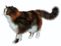 Calico Cat. The Calico domestic cat has a coat color of predominantly white with variation of two other colors Royalty Free Stock Photography
