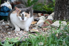 Calico Cat In The Garden Royalty Free Stock Images