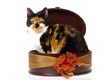 Calico cat inside brown gift box Stock Photos