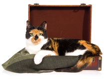 Calico cat lying inside brown suitcase on white Stock Photos
