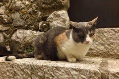 Calico cat on stone step Royalty Free Stock Photos