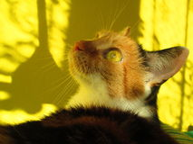 Calico cat. Lying on sofa, shadows stock photo