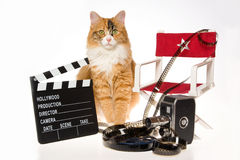 Calico cat with movie props on white background. Calico cat on white background with red director chair, movie reel, clapperboard, vintage camera royalty free stock photos