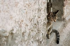 Calico cat peeking out of a window opening. A lot of space for text royalty free stock photo