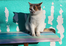 Calico cat on pretty pastel wood bench Royalty Free Stock Images