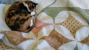 Calico Cat & A Quilt. Calico kitty snuggled up in a curled ball for a catnap on a colorful quilt Stock Photography