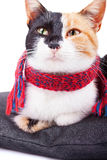 Calico Cat in Red Scarf Stock Photography