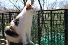 Calico Cat sitting on the balcony and looking forward. Safety gate in image and blurred trees in background stock image