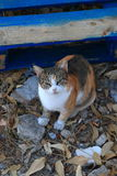 Calico cat sitting on the ground Stock Photo