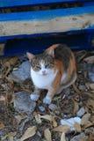 Calico cat sitting on the ground stock photo