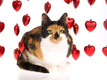 Calico cat with strings of red hearts on white Royalty Free Stock Photography