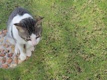 Calico cat royalty free stock image