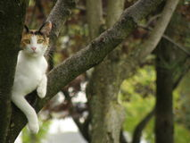 Calico cat Royalty Free Stock Photo