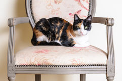 Luxury cat vintage chair Stock Images