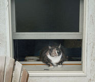 Calico Cat in Window Stock Photos