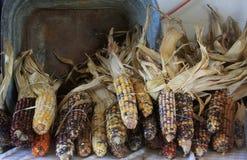 Calico corn Royalty Free Stock Photos