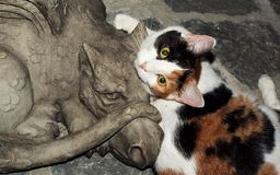 Calico and Dragon royalty free stock photo