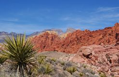 Calico Hills Close-Up Stock Photography