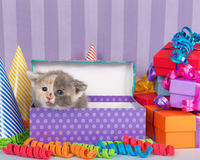 Calico kitten in birthday box with presents and party hats Royalty Free Stock Photos