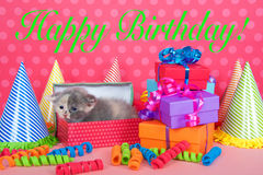 Calico kitten in birthday box with presents and party hats Stock Images