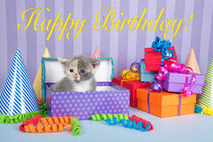 Calico kitten in birthday box with presents and party hats Stock Photography