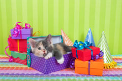 Calico Kitten in Birthday boxes Royalty Free Stock Images