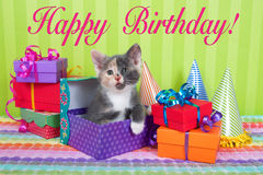 Calico Kitten in Birthday boxes Stock Image