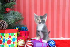 Calico Kitten with Christmas presents. Calico kitten next to a christmas tree with presents and ornaments strewn around the floor, on red fuzzy floor, striped Royalty Free Stock Image