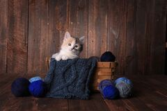Free Calico Kitten In A Basket Of Knitting Yarn On Wooden Background Stock Photo - 204246140