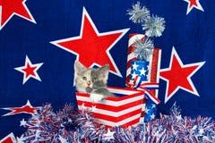Calico kitten patriotic scene Stock Image