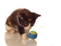 Calico kitten playing with a ball Stock Photos