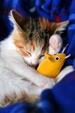 Calico kitten sleeping with her yellow mouse toy. Stock Photo
