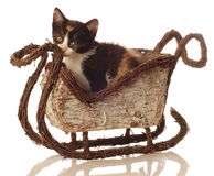 Calico kitten in winter sleigh Stock Image
