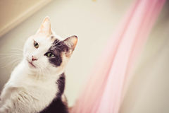 Calico Kitty Stock Images
