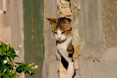 Calico in stone. Calico cat sitting in a small window Stock Image
