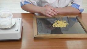 Calidad de prueba del ayudante de laboratorio de las semillas del maíz almacen de video